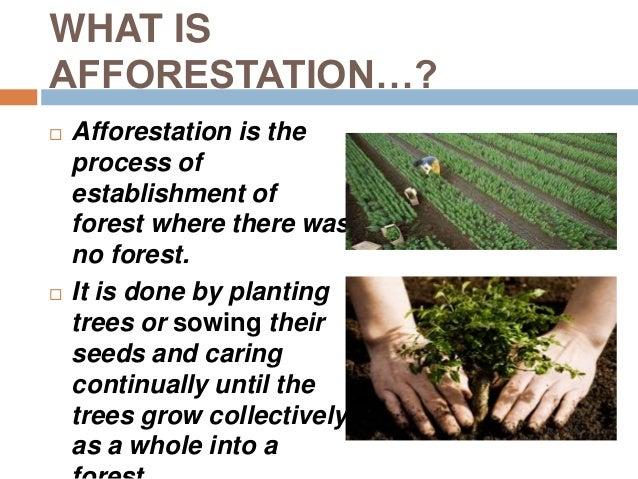short note on deforestation