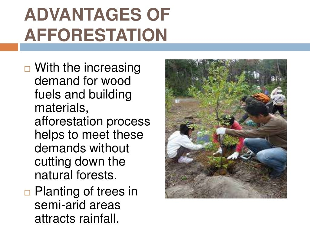 afforestation and deforestation As nouns the difference between afforestation and deforestation is that afforestation is the act or process of creating a new forest where none had existed before, or reforestation of areas long deforested while deforestation is.