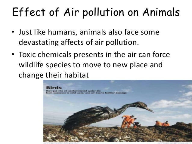 Air Pollution (slide presentation)Air Pollution Effects On Animals And Plants