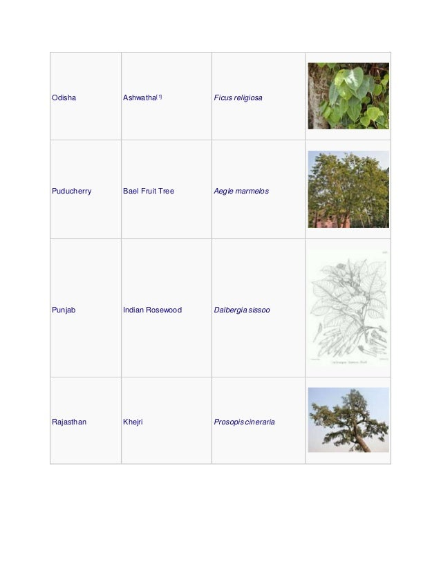 Odisha Ashwatha[1] Ficus religiosa Puducherry Bael Fruit Tree Aegle marmelos Punjab Indian Rosewood Dalbergia sissoo Rajas...