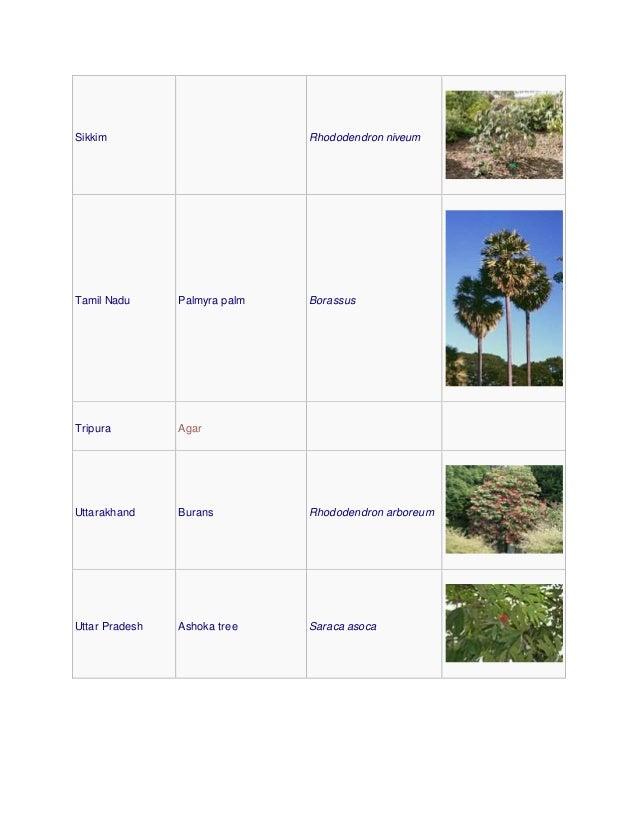 Sikkim Rhododendron niveum Tamil Nadu Palmyra palm Borassus Tripura Agar Uttarakhand Burans Rhododendron arboreum Uttar Pr...