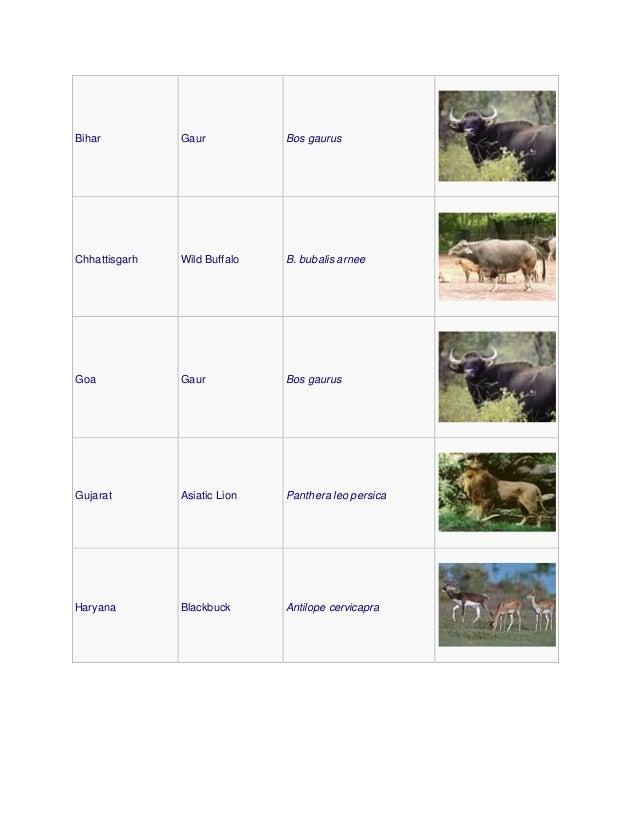 Bihar Gaur Bos gaurus Chhattisgarh Wild Buffalo B. bubalis arnee Goa Gaur Bos gaurus Gujarat Asiatic Lion Panthera leo per...