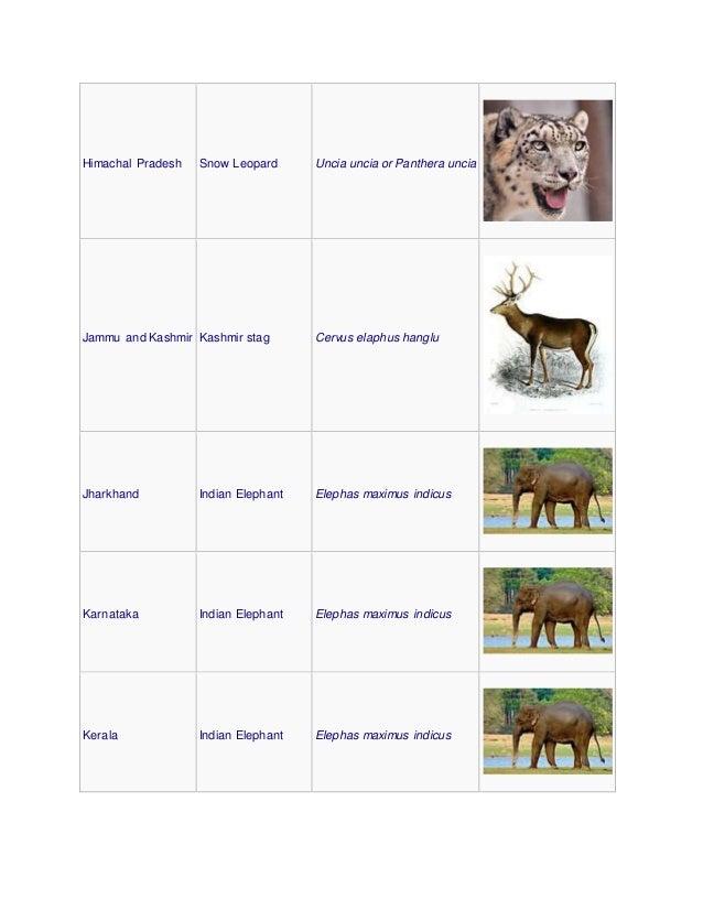 Himachal Pradesh Snow Leopard Uncia uncia or Panthera uncia Jammu and Kashmir Kashmir stag Cervus elaphus hanglu Jharkhand...