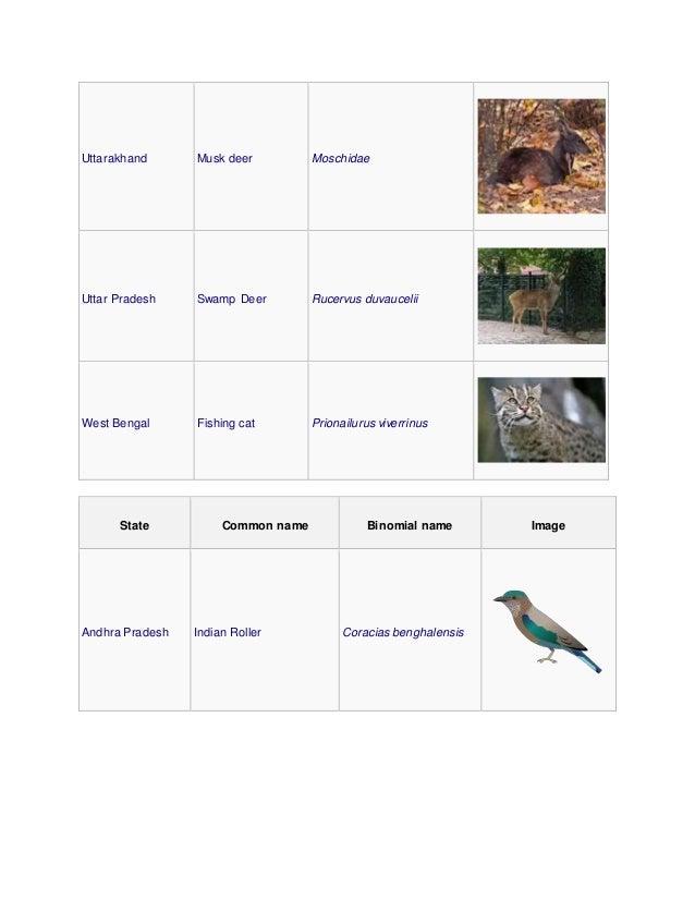 Uttarakhand Musk deer Moschidae Uttar Pradesh Swamp Deer Rucervus duvaucelii West Bengal Fishing cat Prionailurus viverrin...