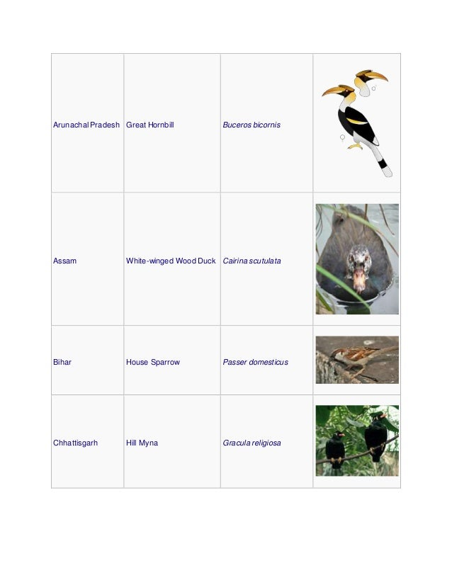 Arunachal Pradesh Great Hornbill Buceros bicornis Assam White-winged Wood Duck Cairina scutulata Bihar House Sparrow Passe...
