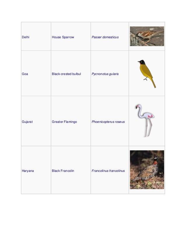 Delhi House Sparrow Passer domesticus Goa Black-crested bulbul Pycnonotus gularis Gujarat Greater Flamingo Phoenicopterus ...