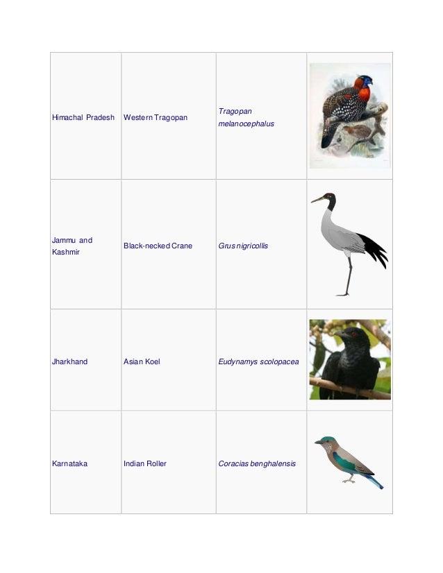 Himachal Pradesh Western Tragopan Tragopan melanocephalus Jammu and Kashmir Black-necked Crane Grus nigricollis Jharkhand ...
