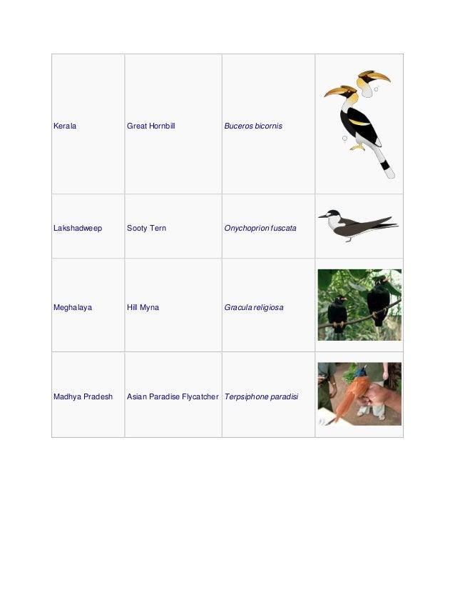 Kerala Great Hornbill Buceros bicornis Lakshadweep Sooty Tern Onychoprion fuscata Meghalaya Hill Myna Gracula religiosa Ma...