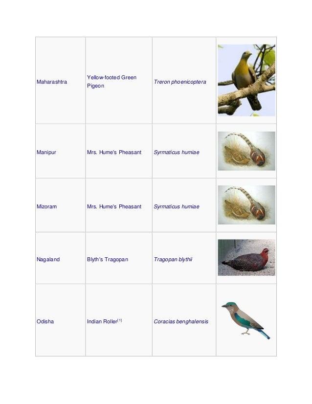 Maharashtra Yellow-footed Green Pigeon Treron phoenicoptera Manipur Mrs. Hume's Pheasant Syrmaticus humiae Mizoram Mrs. Hu...
