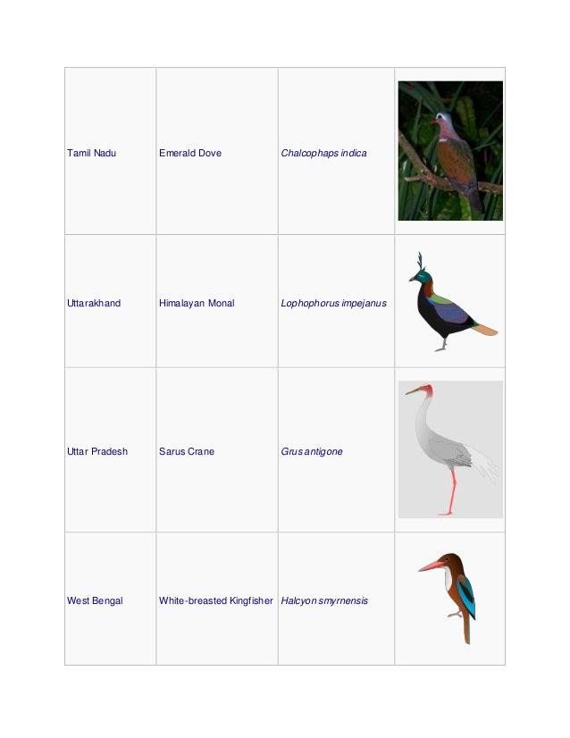 Tamil Nadu Emerald Dove Chalcophaps indica Uttarakhand Himalayan Monal Lophophorus impejanus Uttar Pradesh Sarus Crane Gru...