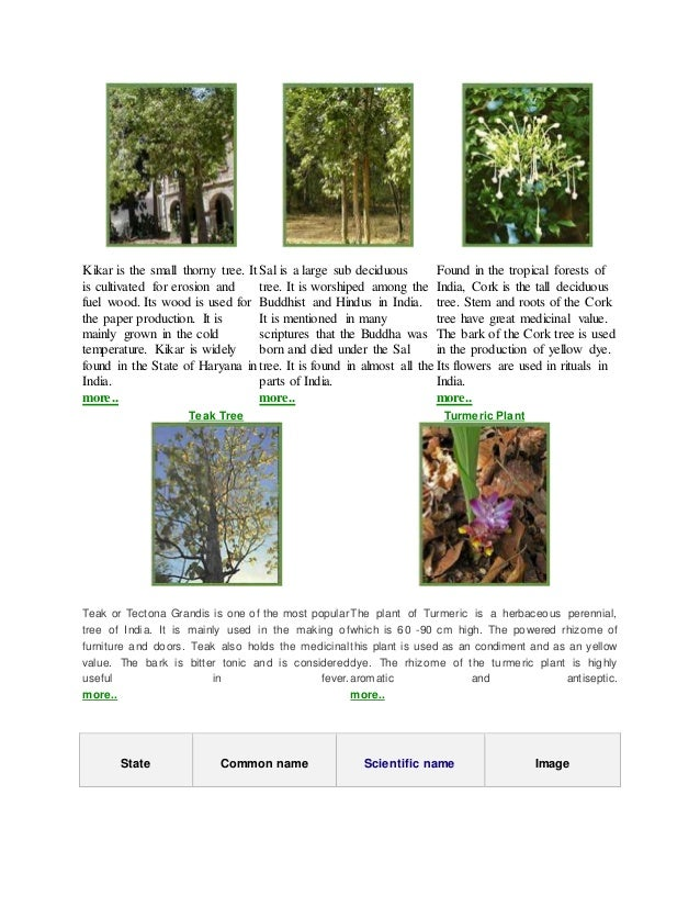 Kikar is the small thorny tree. It is cultivated for erosion and fuel wood. Its wood is used for the paper production. It ...