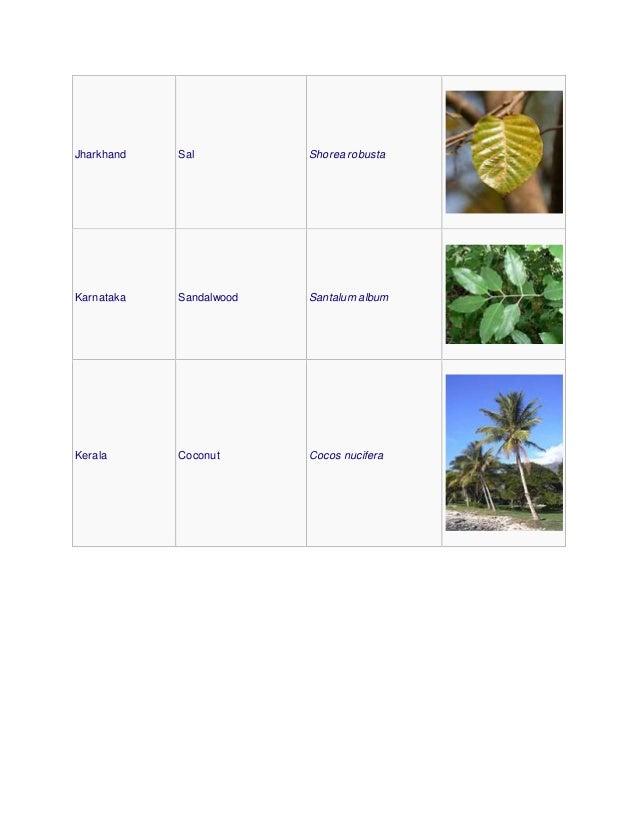 Jharkhand Sal Shorea robusta Karnataka Sandalwood Santalum album Kerala Coconut Cocos nucifera