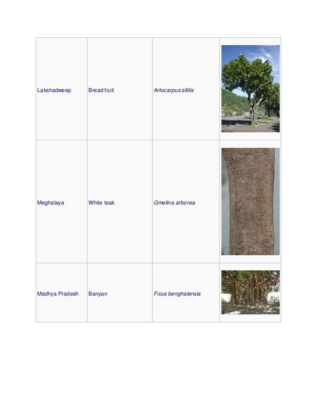 Lakshadweep Bread fruit Artocarpus altilis Meghalaya White teak Gmelina arborea Madhya Pradesh Banyan Ficus benghalensis