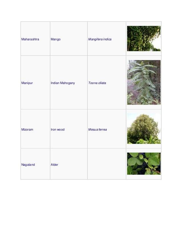 Maharashtra Mango Mangifera indica Manipur Indian Mahogany Toona ciliata Mizoram Iron wood Mesua ferrea Nagaland Alder