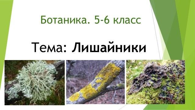 Ботаника. 5-6 класс  Тема: Лишайники