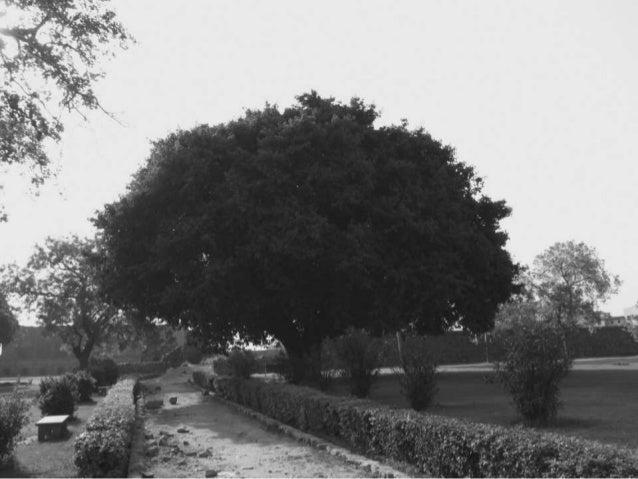 Firoz Shah Kotla Fort