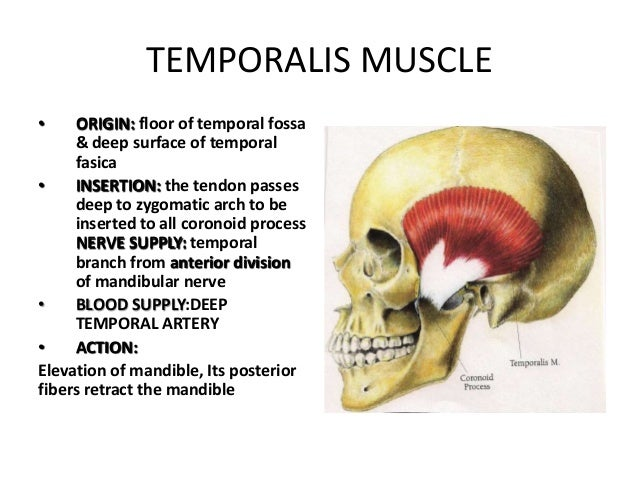 surgical & applied anatomy of temporal and infratemporal fossa