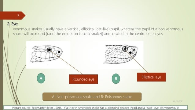 9450e8eb5d93 How to Identify Poisonous and Non-poisonous Snake
