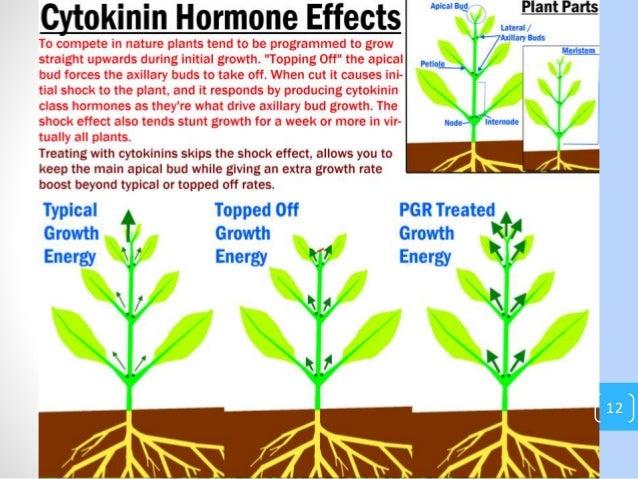 what hormone stimulates testosterone production