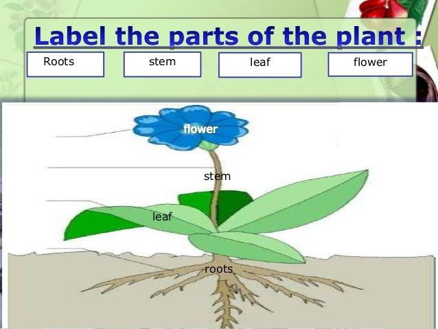Roots stem leaf flower roots leaf stem