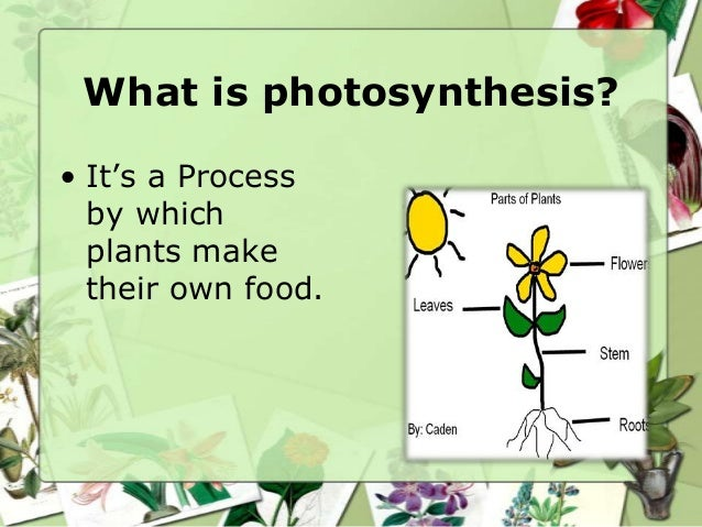 What is photosynthesis? • It's a Process by which plants make their own food.