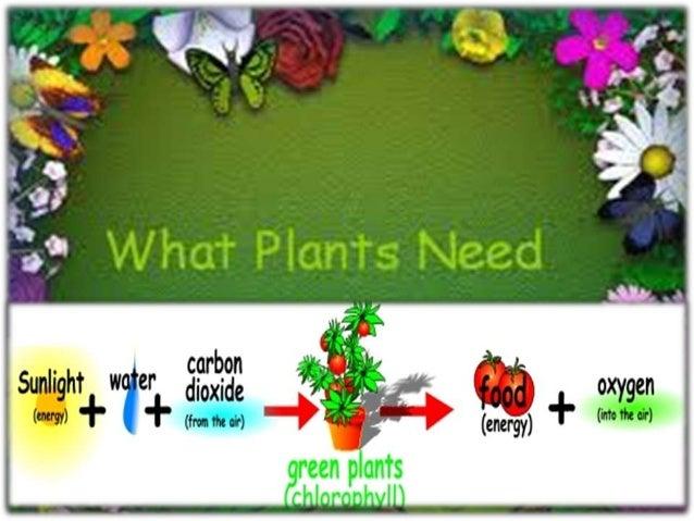 Plants need energy to grow • Plants need energy to grow • Plants get energy from the sun • Plants use energy to carry on t...