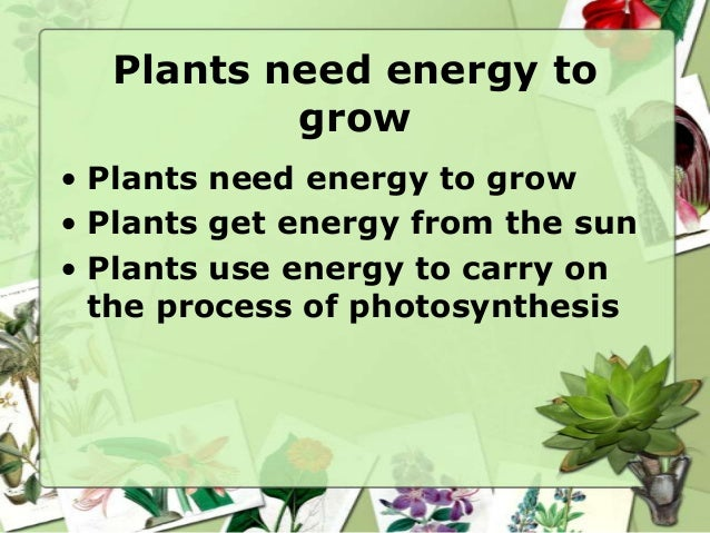 Plants need sunlight for photosynthesis • Cells in the plant trap light energy from the sun • Plants use the sun's energy ...