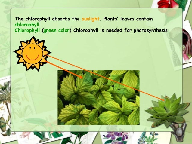 Plants have tiny holes in the bottom of each leaf The tiny holes let air go in and out of the leaf Plants use a gas in the...