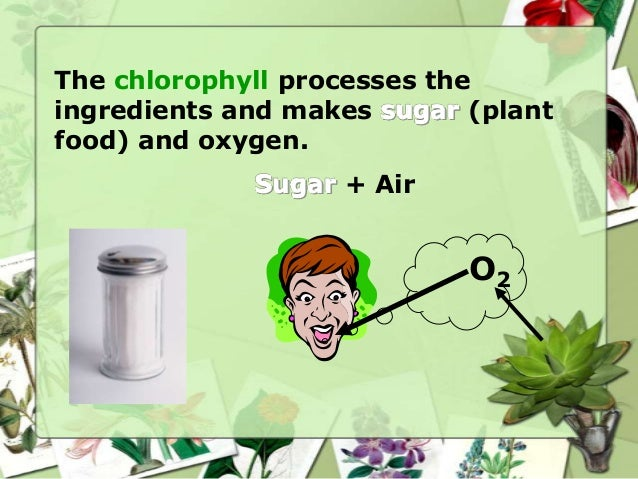 Plants need water for photosynthesis • Plants get water from the soil • Roots bring water from the soil to the plant • Wat...