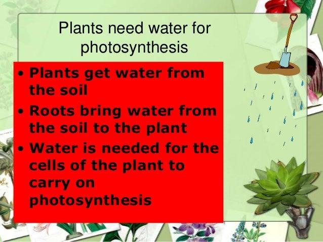 Soil rain leaf flower