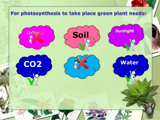 Plant parts and photosynthesis