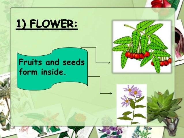 Fruits and seeds form inside.