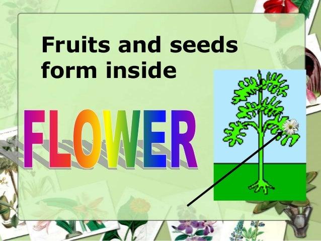 Fruits and seeds form inside