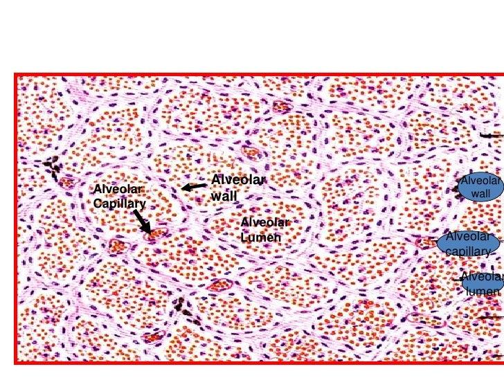 New Practical Histopathology