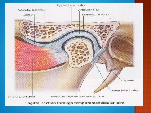 Anatomy Of Tmj