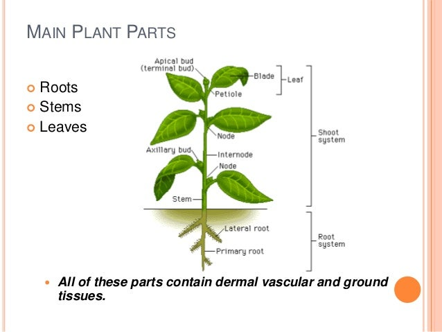 Plants Presentation One For Spaced Learning