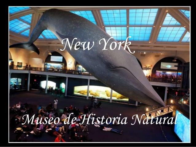 New York Museo de Historia Natural