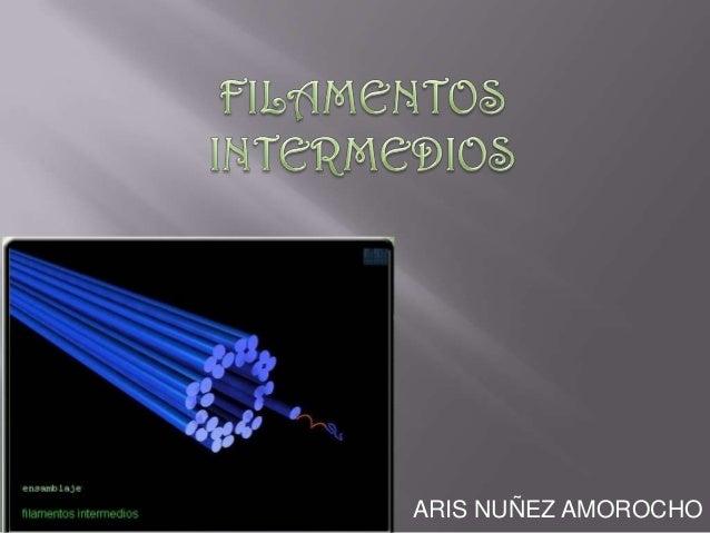 ARIS NUÑEZ AMOROCHO