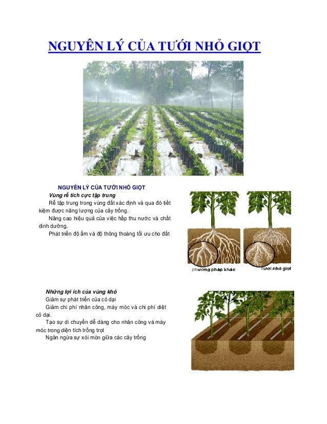 NGUYÊN LÝ CỦA TƯỚI NHỎ GIỌT NGUYÊN LÝ CỦA TƯỚI NHỎ GIỌT Vùng rễ tích cực tập trung Rễ tập trung trong vùng đất xác định và...