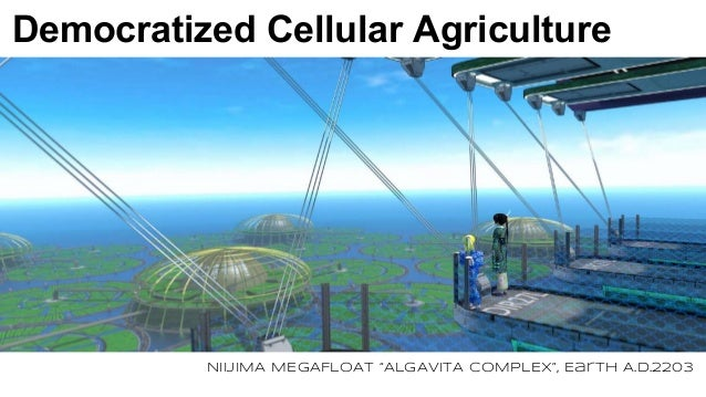 "Democratized Cellular Agriculture NIIJIMA MEGAFLOAT ""ALGAVITA COMPLEX"", Earth A.D.2203"