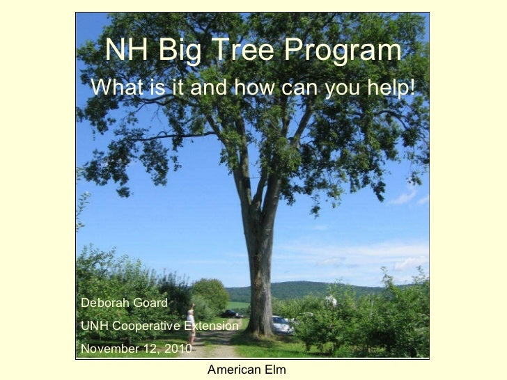 NH Big Tree Program What is it and how can you help! American Elm Deborah Goard UNH Cooperative Extension November 12, 2010