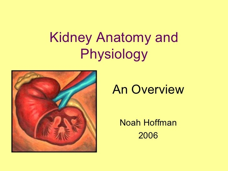 Kidney Anatomy and    Physiology        An Overview         Noah Hoffman            2006