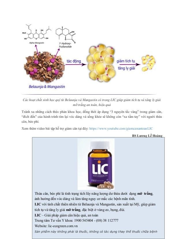 Các hoạt chất sinh học quý từ Belaunja và Mangastin có trong LIC giúp giảm tích tụ và tăng ly giải mỡ trắng an toàn, hiệu ...