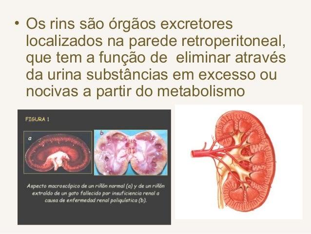 • Os rins são órgãos excretores localizados na parede retroperitoneal, que tem a função de eliminar através da urina subst...