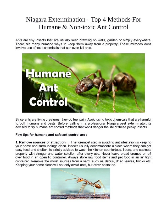 Niagara Extermination - Top 4 Methods For Humane & Non-toxic Ant Control Ants are tiny insects that are usually seen crawl...