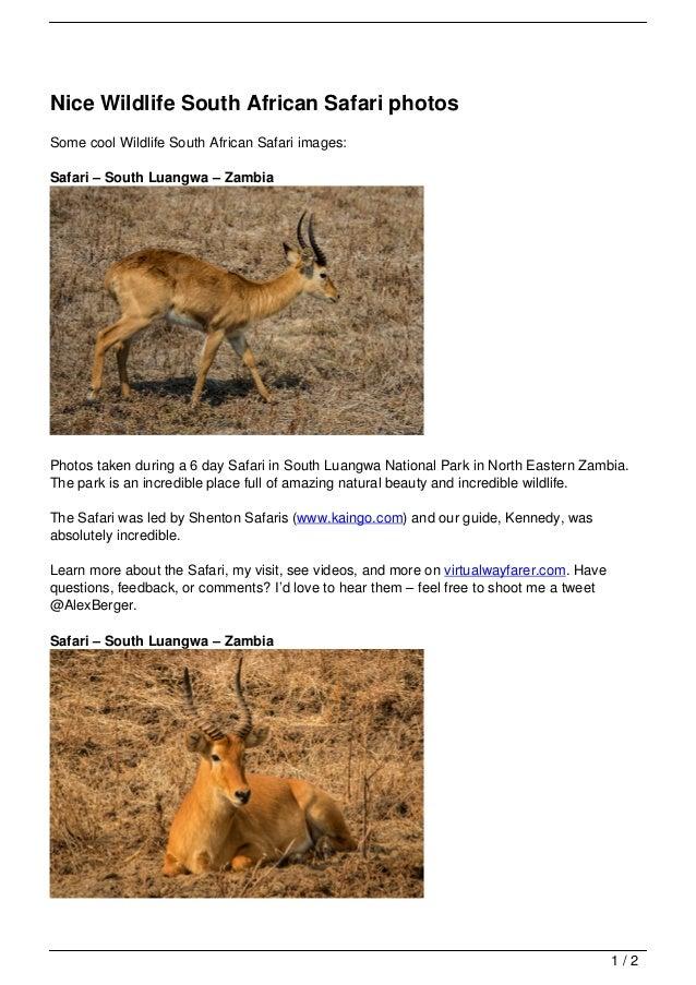 Nice Wildlife South African Safari photosSome cool Wildlife South African Safari images:Safari – South Luangwa – ZambiaPho...