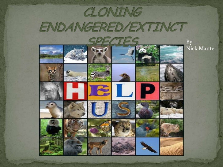 GENETICSCLONING ENDANGERED/EXTINCT SPECIES          <br />By  <br />Nick Mante<br />