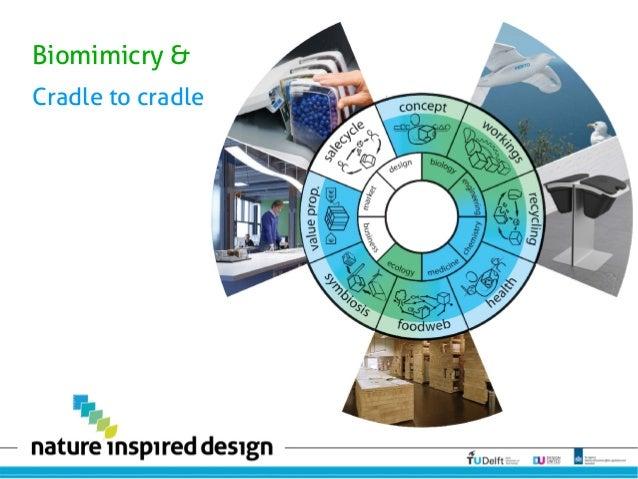 Biomimicry & Cradle to cradle