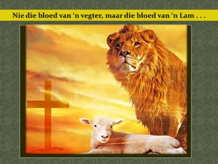 Nie die bloed van 'n vegter, maar die bloed van 'n Lam . . .