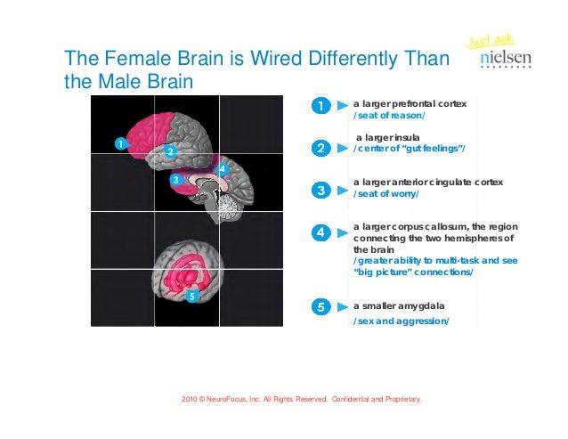 male vs female 6 the female brain is wired